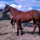 Fastnet Rock x Legally Bay filly at Makybe