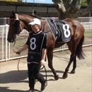 Olivia with Halin Diamonds at Warwick Farm races