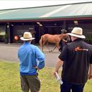 Out and about doing what we do best inspecting Karaka yearlings for upcoming sale starting Mon 27/1